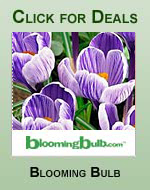 Flower Bulbs & Plants