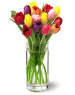 FTD Bright Lights Tulip