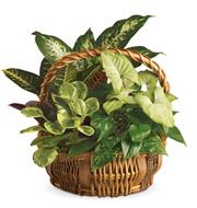 Emerald Garden Planter Basket