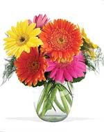 Gerbera Daisies Vase