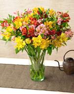 Alstormeria Vased Bouquet